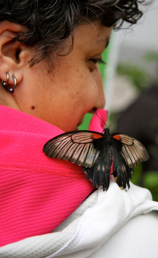 butterfly on rana's shoulder