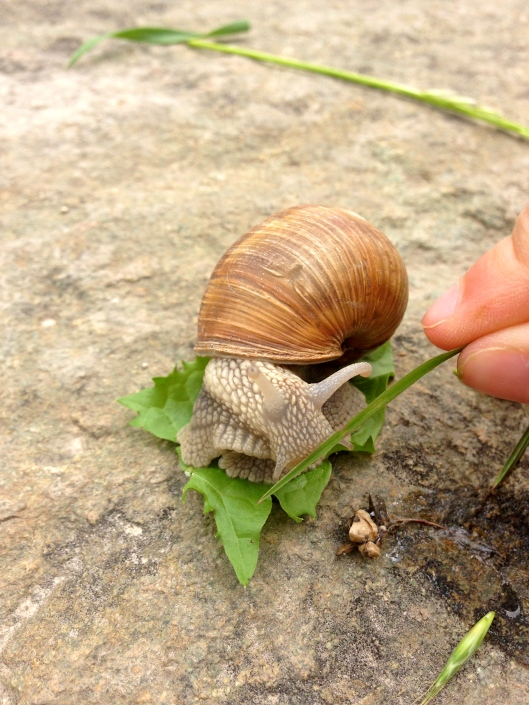 feeding the snail some grass