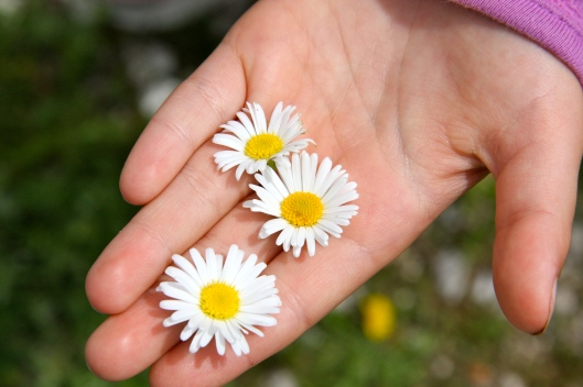 three daisies in isabel's hand